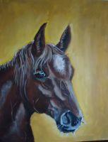 konj-7