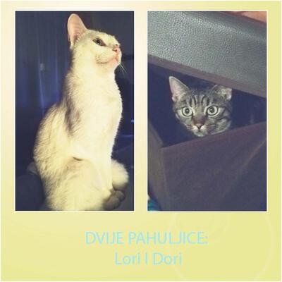 """""""Dvije pahuljice: Lori i Dori"""""""